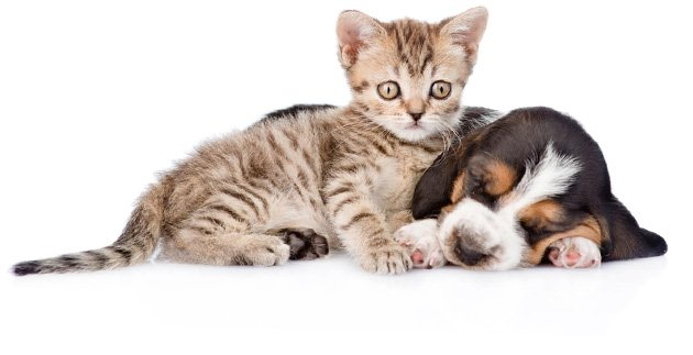dog veterinary clinic